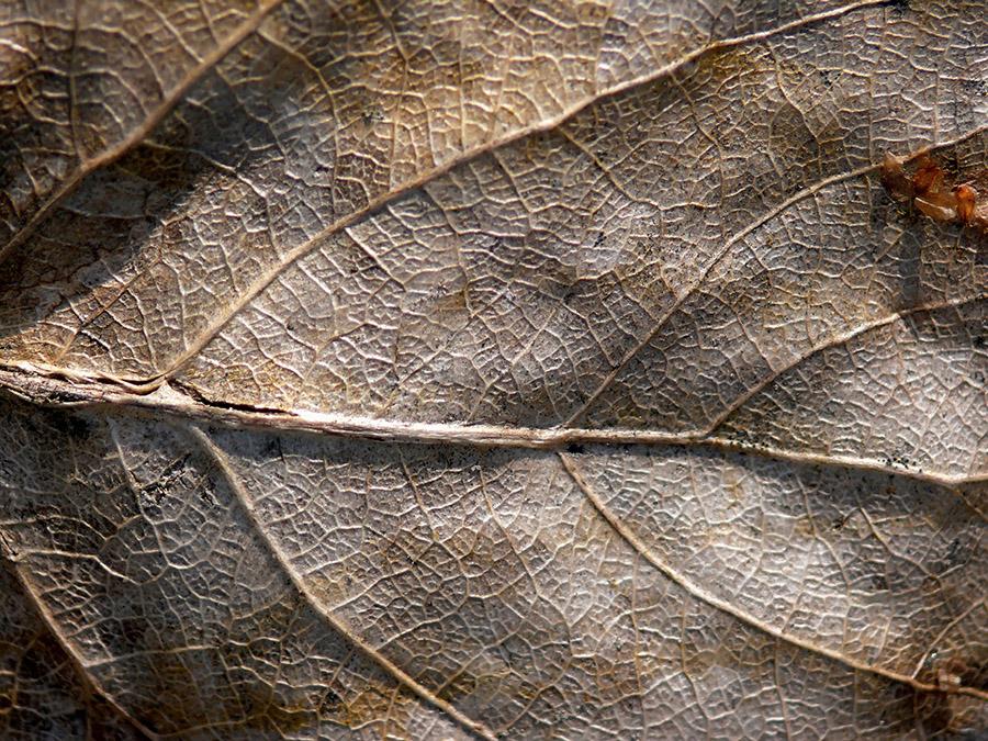 3 Common Tree Problems