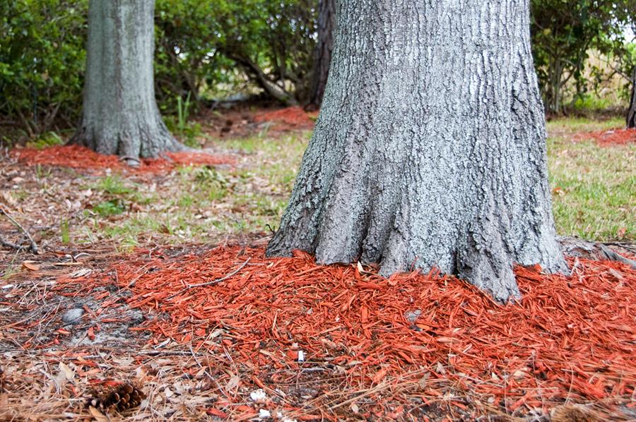 3 Winter Tree Care Tips