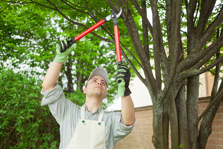 A Spring Trees and Shrubs Checklist