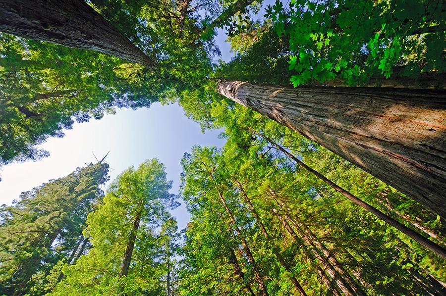 Tree Transplantation Company Saves Memorial Tree in Washington