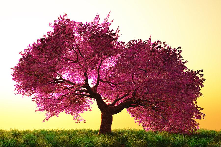 Big Trees Inc. Helps Family Preserve Memorial Tree